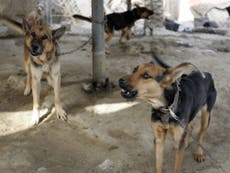 US gave 'death sentence' to working dogs stranded in Kabul, says animal rights group