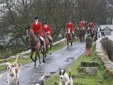 Trail-hunting suspended by two more of UK's biggest landowners as police investigate webinars