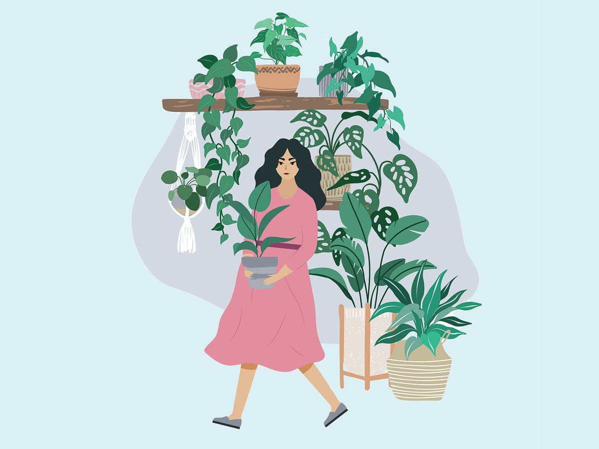 It's Houseplant Week! Celebrate with our expert indoor plant guide