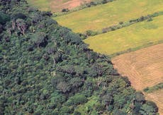 UK government 'mulling ban on soya linked to illegal deforestation'
