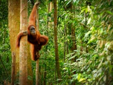 Everyday shopping from brands like Heinz and Yakult helps destroy rainforests, signaler des réclamations