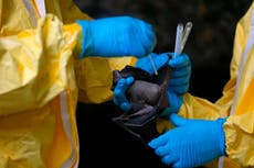 Study warns thousands of Covid-like infections from animals happening every year, risking new pandemic
