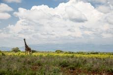 Human destruction of nature speeding up wildlife decline