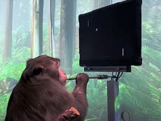 Elon Musk shares video of his Neuralink monkey playing video games with its mind