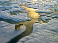 """Olje- og gassfirmaer vil øke utvinningen av Arktis med """"mer enn 20%"""" i løpet av de neste fem årene"""