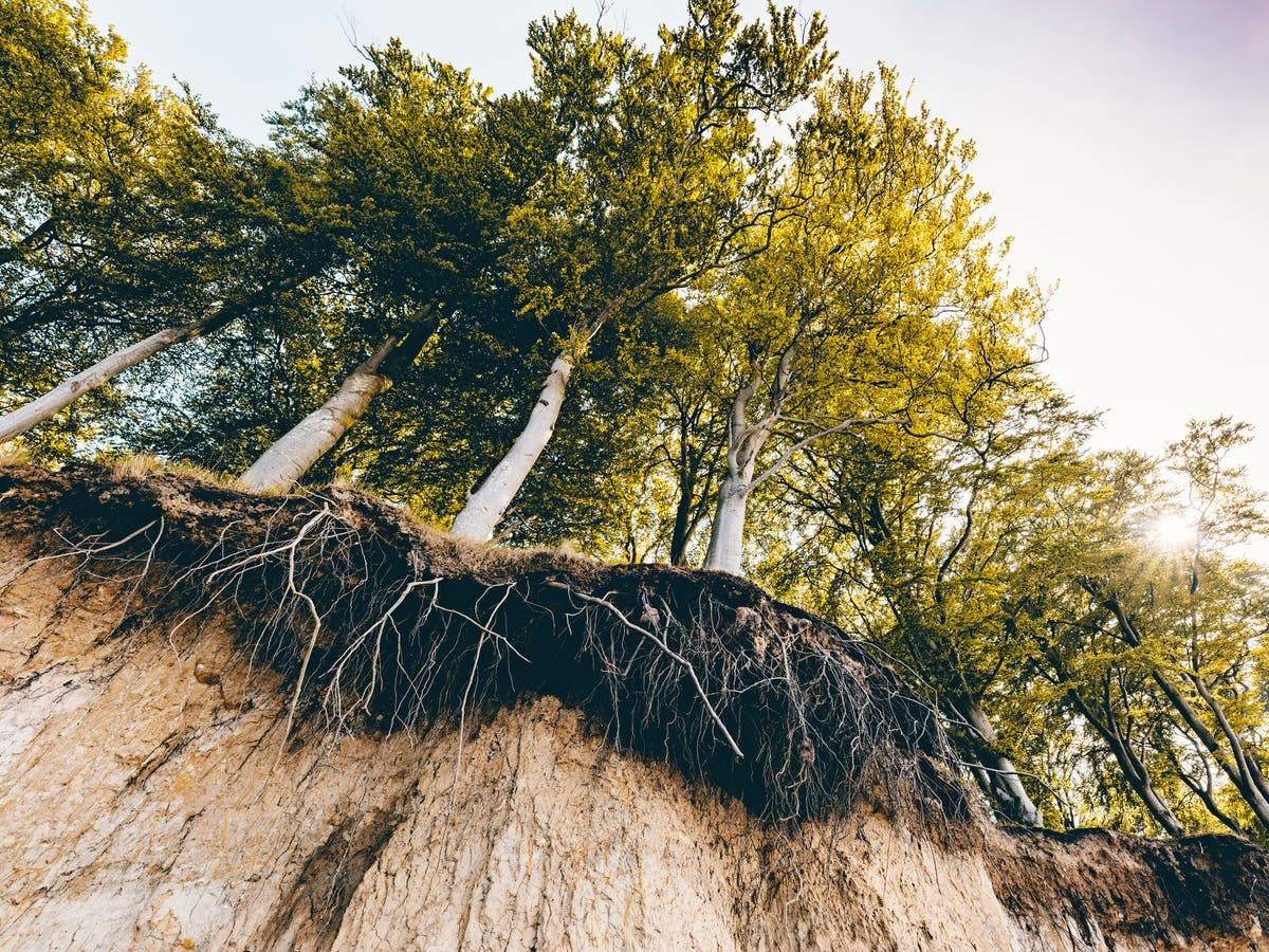 Trees 'stressed' by the climate crisis work together to form resource-sharing root networks