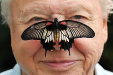 On David Attenborough's 95 aniversário, look at these soothing images of him with animals
