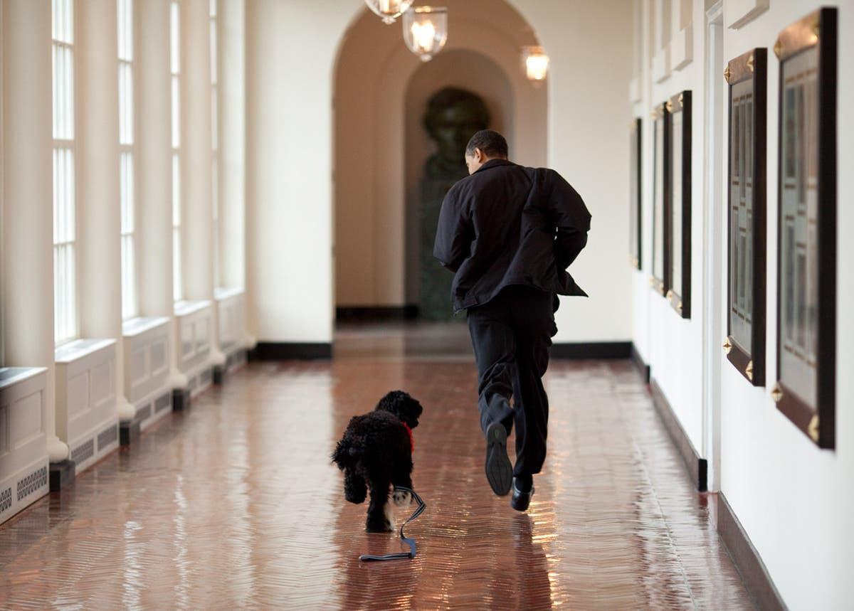 Barack Obama announces death of 'true friend and companion', family dog Bo
