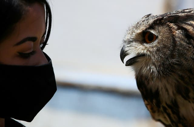 Falconer Giovanna Piccolo performs with her Eurasian eagle-owl at 'Roma World' theme park, during the coronavirus disease (COVID-19) pandemic, in Rome