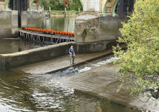 Baby minke whale on the loose in River Thames after escaping rescuers