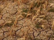 UK farmers failing to adapt to extreme weather brought by climate crisis, study finds