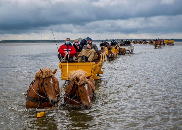 Horse-drawn carriages drive through the mudflats near Cuxhaven, northern Germany