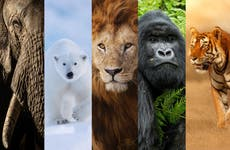 New 'Big Five' animals of wildlife photography revealed after global vote