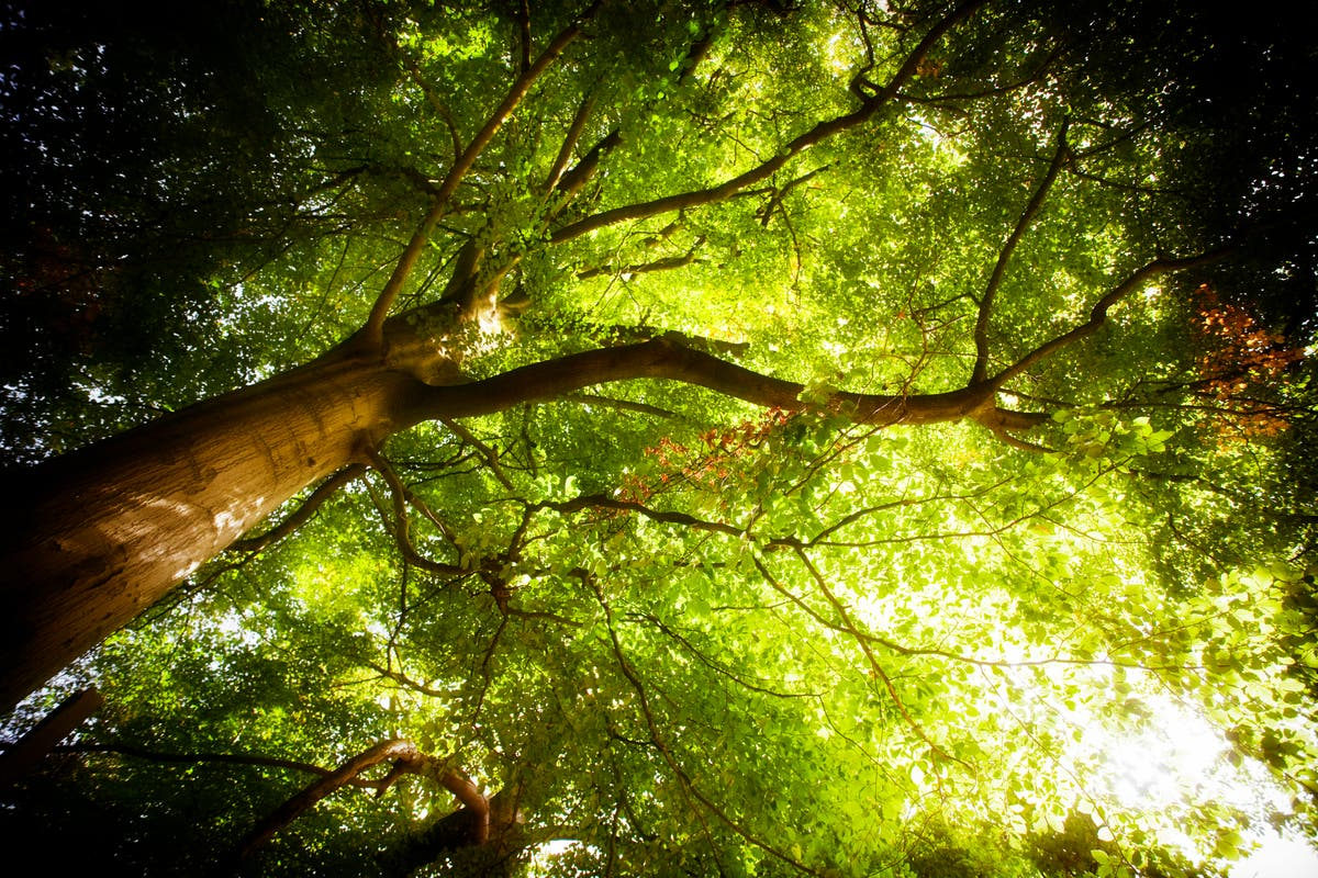 Finding the Mother Tree: How Suzanne Simard changed our understanding of t nature