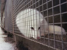 Real fur: Ban 'will spare millions of animals' as ministers take step towards outlawing imports and sales