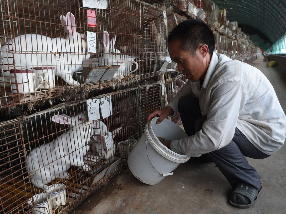 China urged to call time on fur farms after WHO's report into Covid's origins
