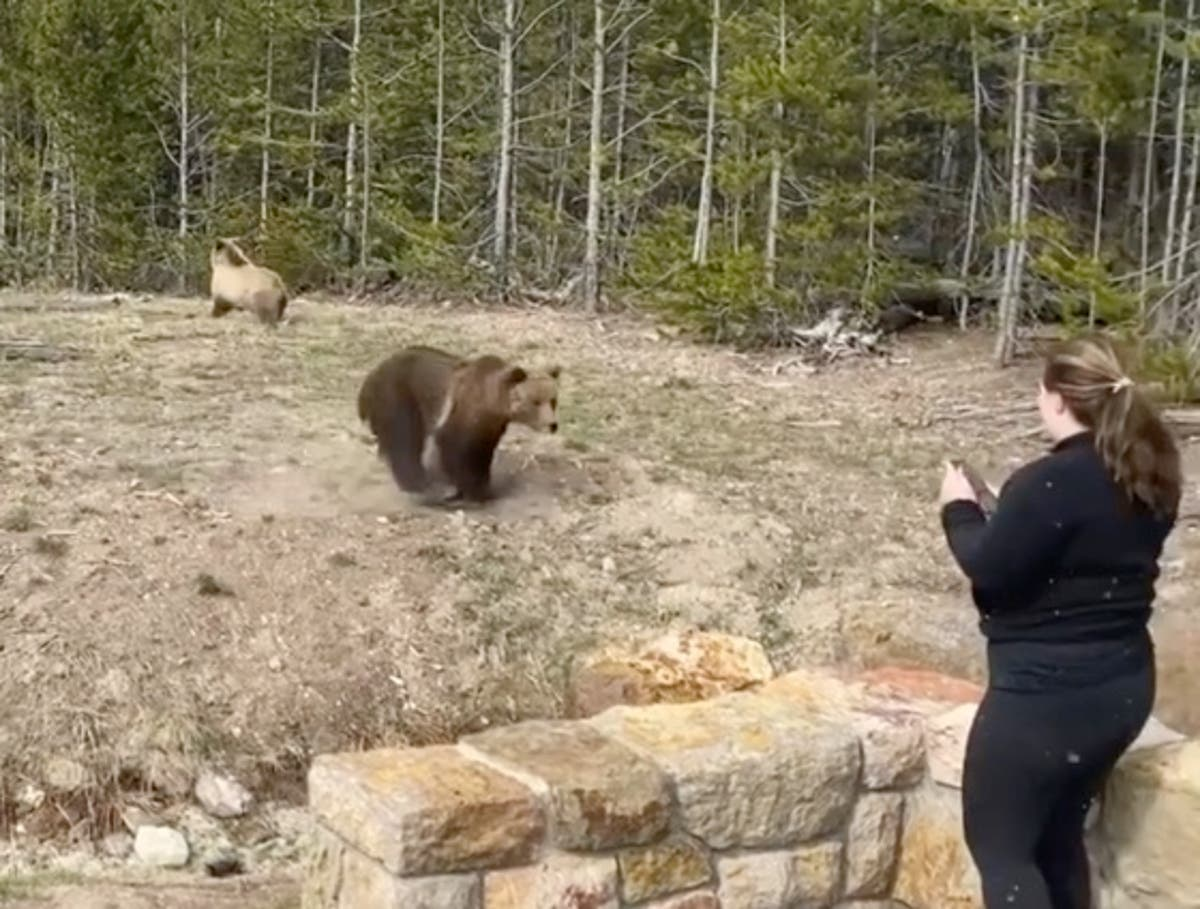 Woman charged at by grizzly bear after approaching animal and its cubs in Yellowstone
