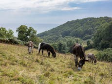 Rescue donkeys to give rare British wildflower boost in biodiversity push