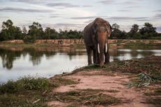 We're clamping down on the ivory trade, but is it too late for elephants?