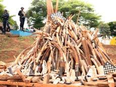 西アフリカは密猟者を止めているが、違法な野生生物取引からのお金の流れは止めていない, 研究は見つけます
