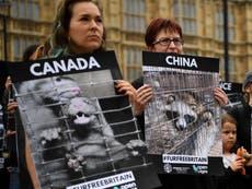 G7サミット: Disease experts urge Boris Johnson to push for global ban on fur farming