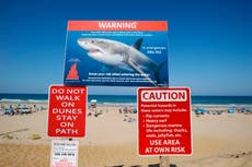 Cape Cod's great white shark numbers increase with researchers tagging more of the predators than ever
