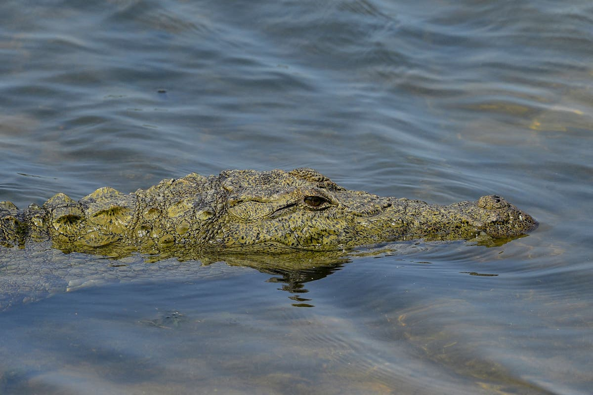 British woman in coma after being saved from crocodile attack by twin sister
