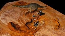 Newly classified dinosaur species is Australia's largest