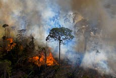 UK government complicit in Bolsonaro's assault on Amazon, 30 MPs warn