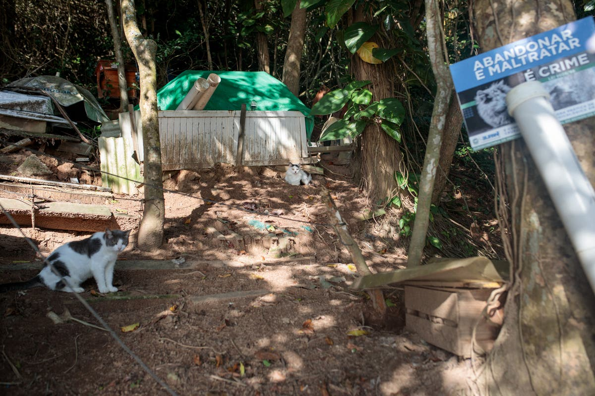 What is happening on the Brazilian island populated only by cats?