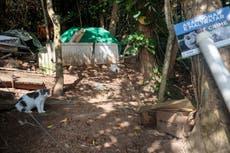 O que está acontecendo na ilha brasileira povoada apenas por gatos?