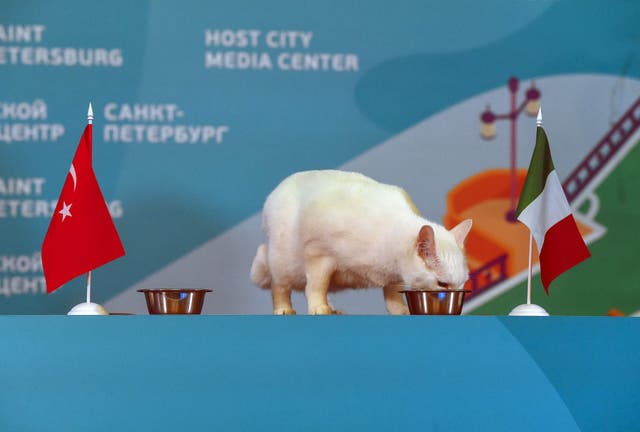 Achille the cat, one of the State Hermitage Museum mice hunters, attempts to predict the result of the first UEFA EURO 2020 football match between Turkey and Italy, during a ceremony in Saint Petersburg, on June 11, 2021