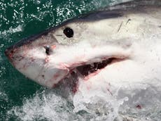 Great white sharks are swimming close to NYC coasts, trackers reveal