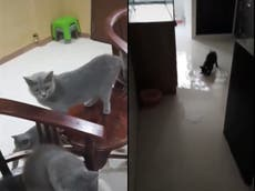 Cats turn on tap and flood flat of Singapore man for a second time