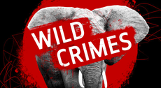 New podcast explores wildlife crime and asks what can be done to stop it