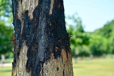 Man ticketed in suburban Chicago dog park for tree treatment