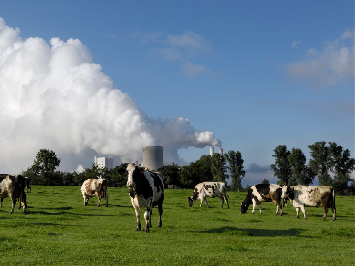 'Cows are the new coal' investors warn, calling for stricter agricultural emissions targets