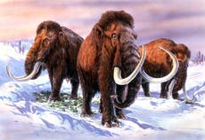 Ancient climate change started decline of prehistoric elephants – not humans, 研究によると