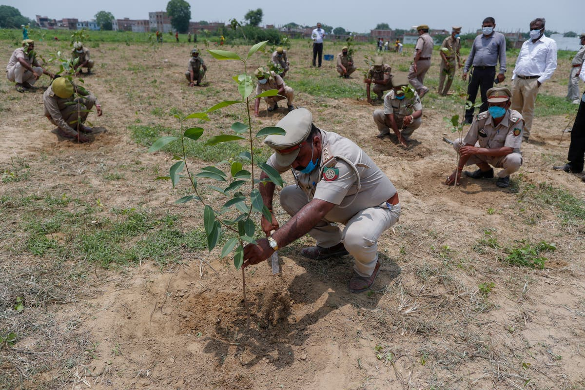 Indians plant millions of saplings amid mass campaign