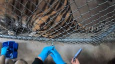 How zoos are preventing Covid outbreaks among animals