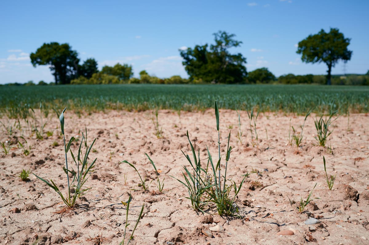 Tree planting could play 'crucial role' in helping Europe adapt to worsening droughts