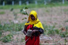 Indians plant millions of saplings in a single day to combat climate crisis