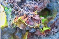 Indian scientists discover new species of moss in Antarctica