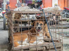 Covid: Indonesian markets discovered slaughtering and selling live bats, rats and dogs