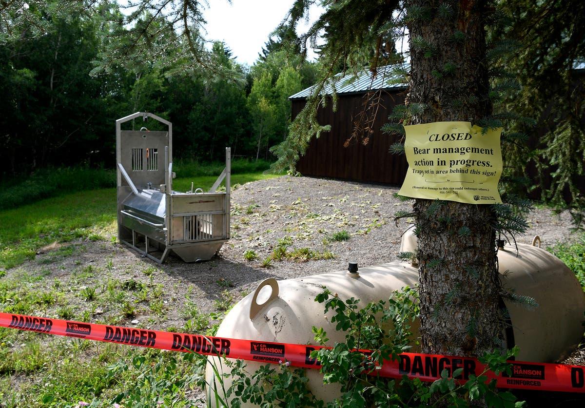 テントから女性を引きずり殺した後、ハイイログマが射殺された