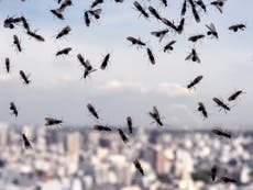 Millions of flying ants picked up on radar and could swarm Wembley during Euro 2020 final