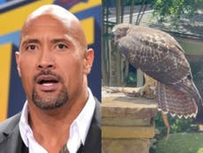 """Dwayne Johnson compartilha um vídeo """"incrível"""" de um falcão lutando contra uma cobra - e atrapalhando seu treino"""