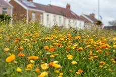 Let gardens grow wild to save bees, says government