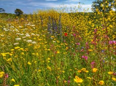 New 'wild belt' designation could boost biodiversity and return lost wildlife to towns and cities