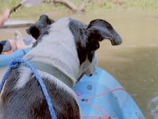 Kayakers save elderly dog who had run away from 4 July fireworks